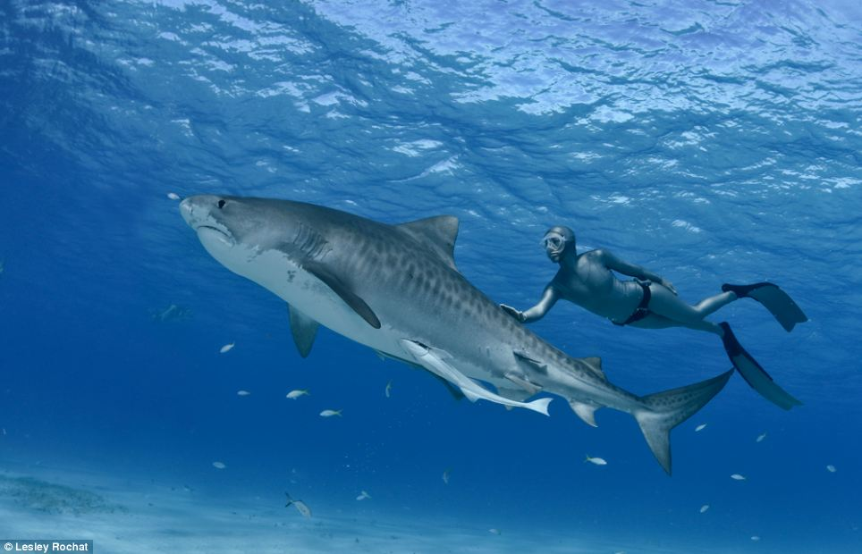 Beautiful: Rochat set up the AfriOceans organisation to fight for shark species across the world and campaign against nets