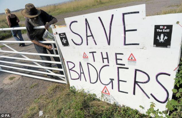 Protest: The sign yesterday outside an anti-cull camp near Watchet in Somerset