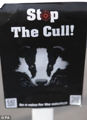 Protest: Animal rights groups say badgers should be vaccinated instead of culled