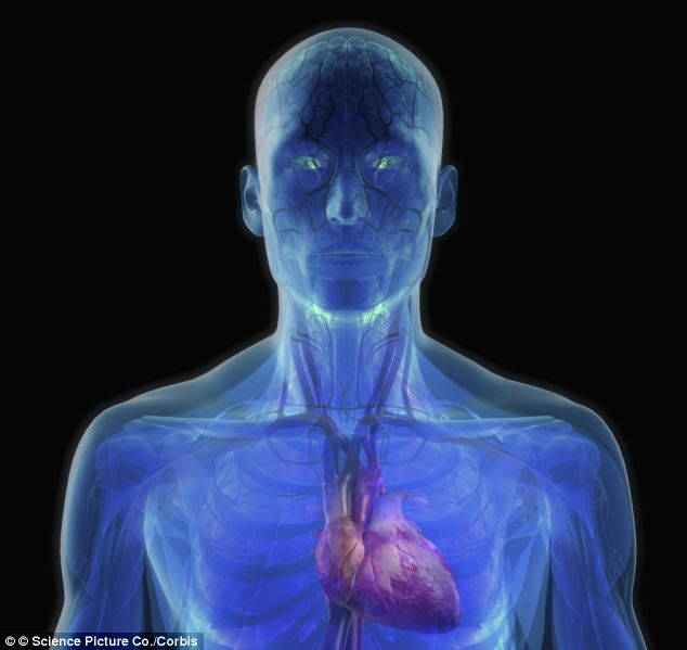The carotid body, a small cluster of nerve cells found on the side of each carotid artery that run down both sides of the throat, regulates the amount of oxygen and carbon-dioxide in the blood.