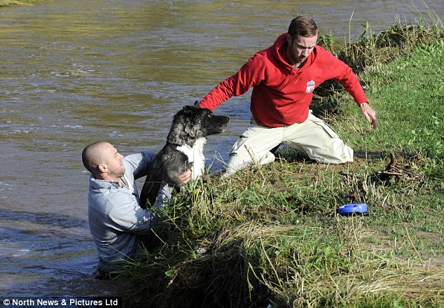 Dog owner Phil Foster is helped by a passer by rescuing his Japanese Akita dog, Thai, who had fallen into the flooded river in Saltburn, Cleveland