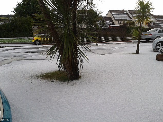 Covered: The aftermath of an intense hail storm yesterday that turned one area of Falmouth into a winter landscape