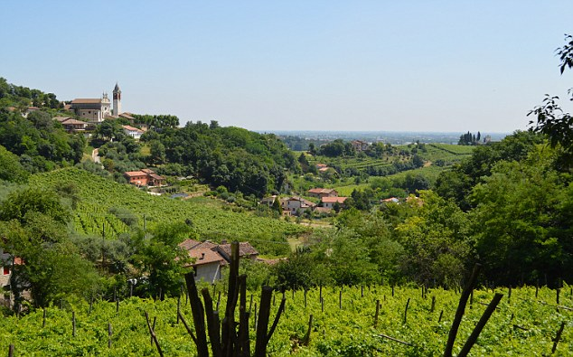 Vicenza's rolling landscape