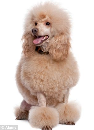 15 per cent of people said Nick Clegg resembled a poodle