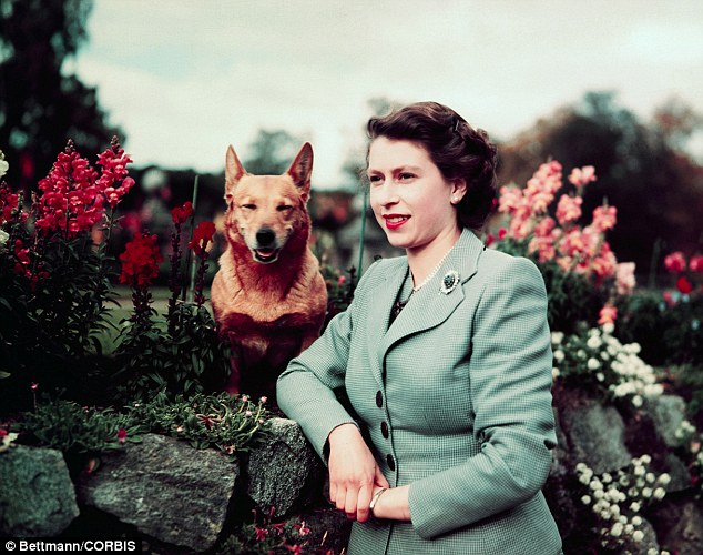 The Queen's love of corgis was said to have been sparked on her eighteenth birthday, when she was given a Pembroke corgi
