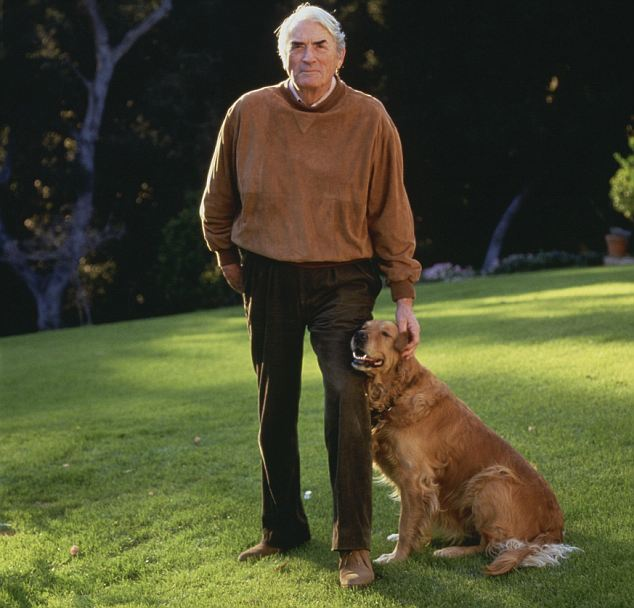 Home sweet home: Gregory Peck and his pet golden retriever on the lawn at his Los Angeles home