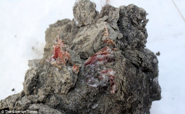 Muscles seen on the mammoth's carcass