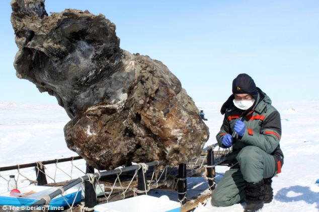 Scientists have discovered 'the world's best preserved trunk'