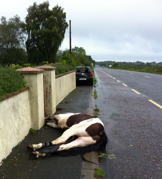 They then left the animal to die on the side of the road, only metres from the crumpled car, with blood pouring from its head, neck and front legs