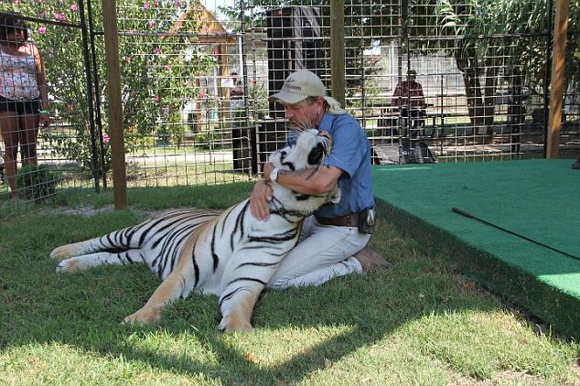 Schreibvogel said he did not know why the employee put her hand into the cage with the tiger