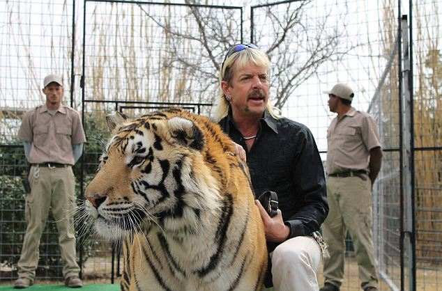 The park's owner said the animal would not be put down because 'it was not the tiger's fault'