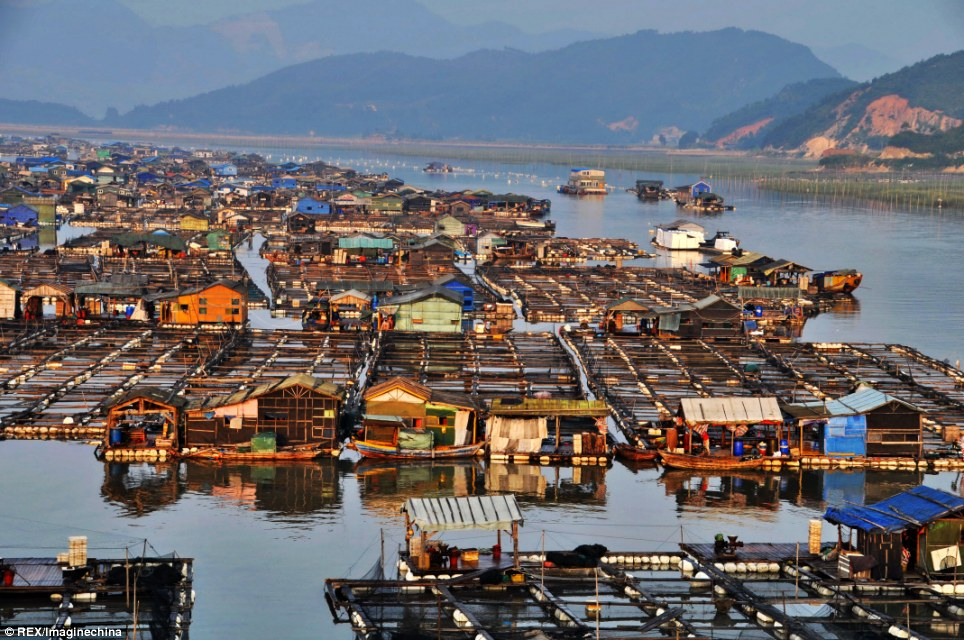 Whatever floats your boat: Wooden houses and seafood farms build a water community in Ningde City in southeast China