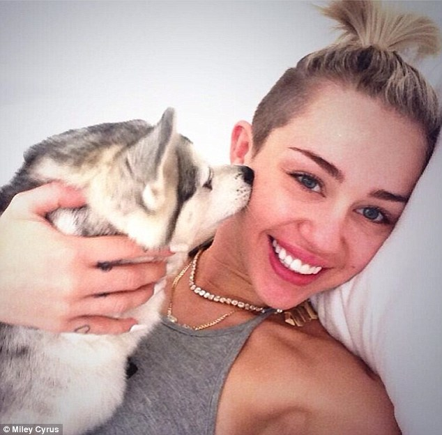 Unconcerned: Miley has been working hard promoting the album and spending time with her beloved dogs