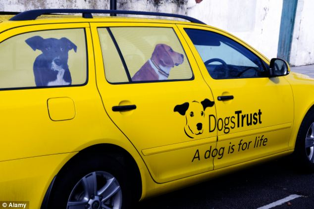 Not just for Christmas: Charity Dogs Trust, which coined the 'A Dog is For Life' slogan said it was 'disappointed' with the supermarket