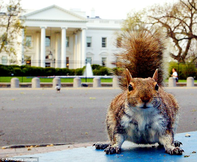 Shutdown spread: With federal gardeners on furlough, squirrels are running rampant in the White House garden eating up all the ripe produce