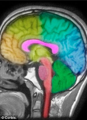 While our body is at rest, the brain is hard at work removing toxins produced during our waking hours