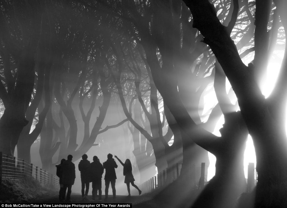 Haunting: This black and white image of a group of friends playing around in an avenue of trees called Mystical Morning was taken by Bob McCallion and won the Living The View category