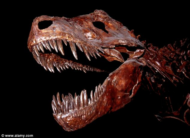 They don't make them like they used to: Not only is their weight distributed evenly on their joints, but the 'squishy' joints of dinosaurs like the T Rex, pictured, meant their skeletons could withstand more pressure