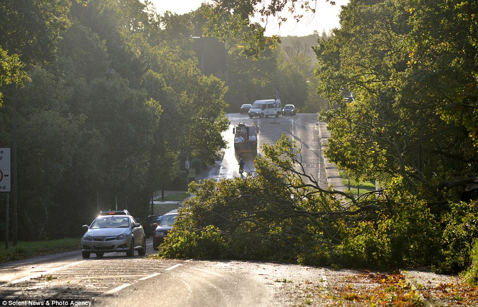Diversion: High winds throughout southern England hit many commuter routes as trees failed to cope with the winds, like here in Southampton
