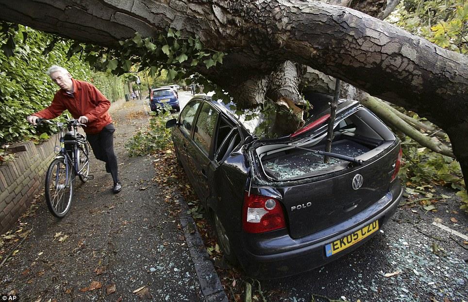 Crushed: A cyclists ducks under this fallen tree in Hornsey, north London, which has completely destroyed a car during Britain's worst storm for years