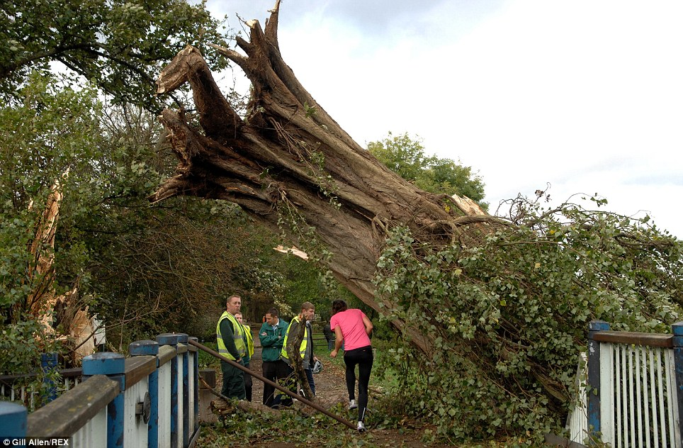 Uprooted: A jogger runs under a fallen lime tree on a footbridge surrounded by workman by the River Thames at Putney Embankment in south-west London