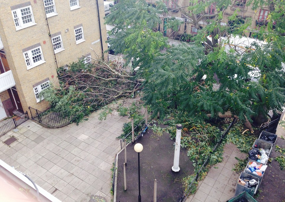 A tree cuts off a courtyard in Aldenham Street, Euston, narrowly missing homes