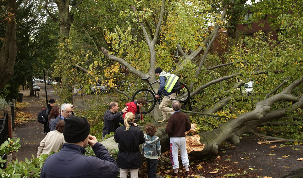 A cyclist climbs over a fallen tree lying across the road in Shepherd's Hill, north London, as passers by look on