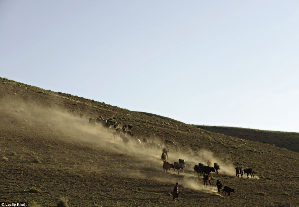 Dusty plains: Farming in Afghanistan is also documented through the series of pictures