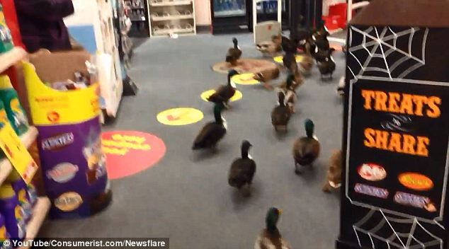 'This place is dead anyways!': The ducks decide it's time to leave.