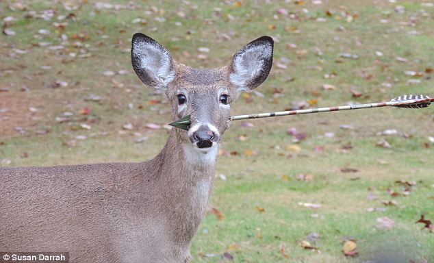 Bow hunting for deer is legal in all 50 states, but ethical hunters aim for the body