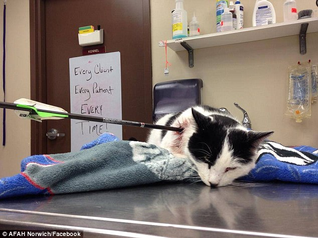 Gruesome discovery: Elliot the cat was found on Monday impaled by an arrow and animal control believes he was used as target practice