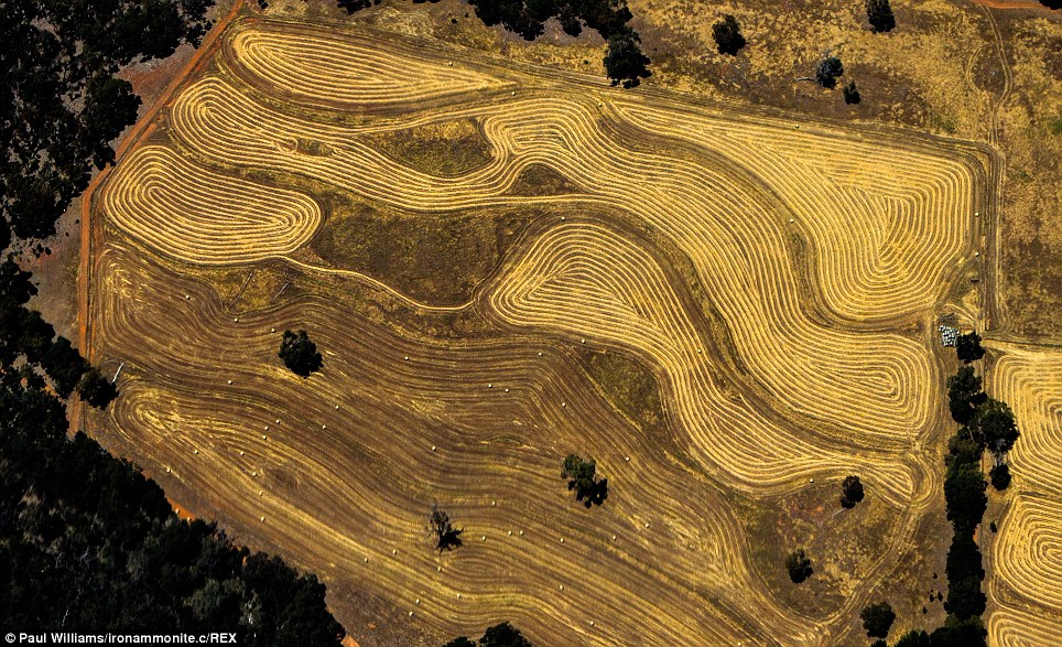 This could be a golden sculpture or parchment. But it is actually a farm near Perth photographed from the air