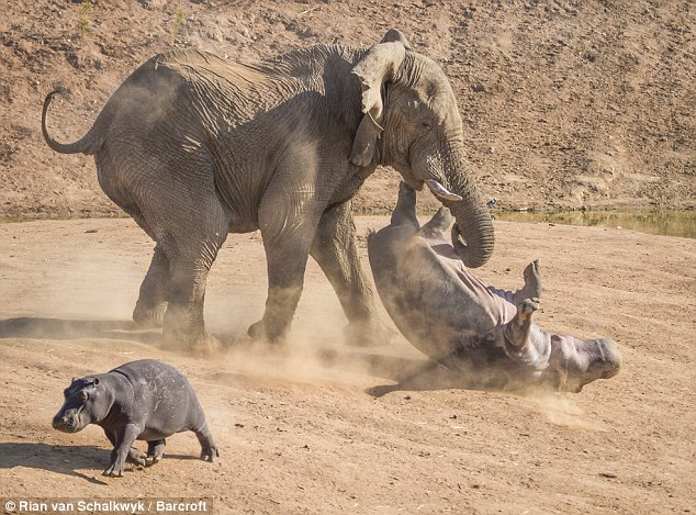 The scene was captured by wildlife photographer Rian van Schalkwyk, 40, at the Erindi Private Game Reserve in Windhoek, Namibia