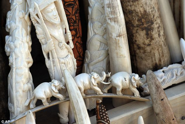 Fish and Wildlife officials showed off thousands of confiscated ivory tusks, statues, ceremonial bowls, masks and ornaments - a collection they said represented the killing of more than 2,000 adult elephants