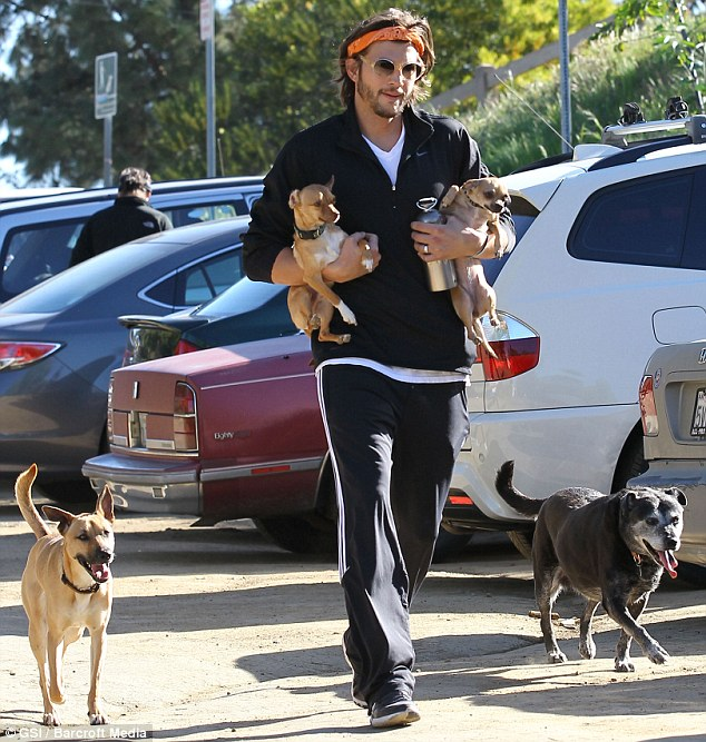 Walkies: He also had a Chihuahua called Bama with his then-wife Demi Moore, pictured here with a gaggle of canines during a walk with Rumer Willis at Runyon Canyon in Los Angeles back in 2011