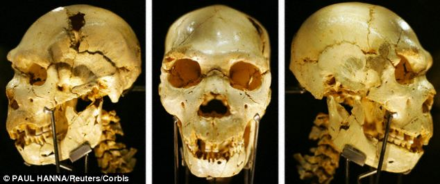 A combination of three separate photographs showing the skull of a Homo heidelbergensis, d