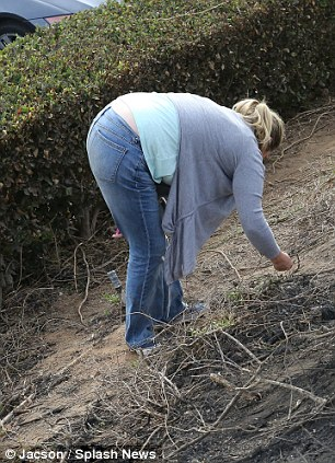 Memento: A fan scours nearby undergrowth for shard of carbon fibre which were sent flying from Paul Walker's car after the crash