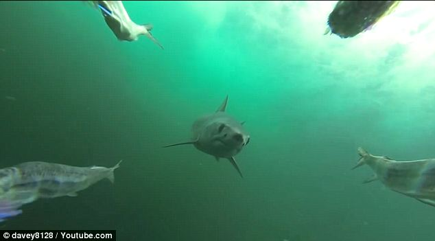 Deadly stalker: Terrifying video taken from beneath a speeding fishing boat shows just how sneaky the mighty mako can be