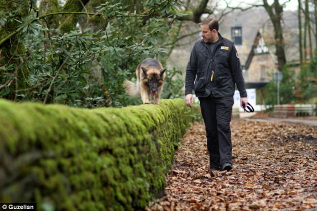 Re-trained: Mr Hesmondhalgh, who specialises in dog behaviour, set about a strict training regime, in which he said 'patience, persistence, and being calm' were key
