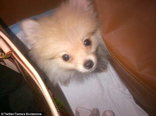 Cute: Tamara Ecclestone tweeted a photo of her new dog alongside the words: 'Travelling to LA with our new addition'