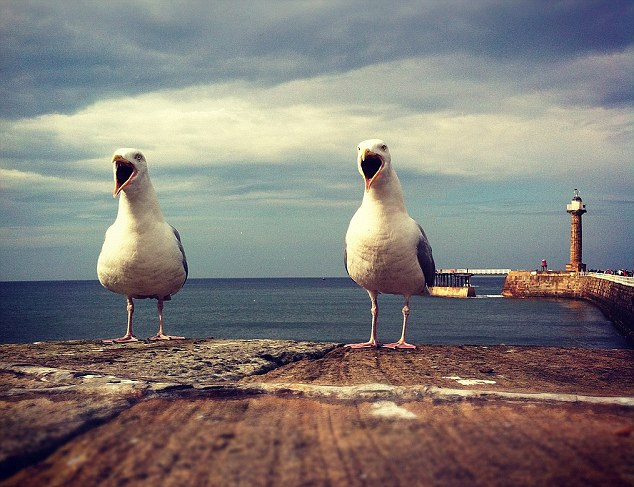 Ewan Jamieson's seagull picture