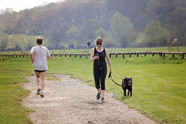 Not enough exercise: One n three dogs are not allowed to run around properly (file picture)