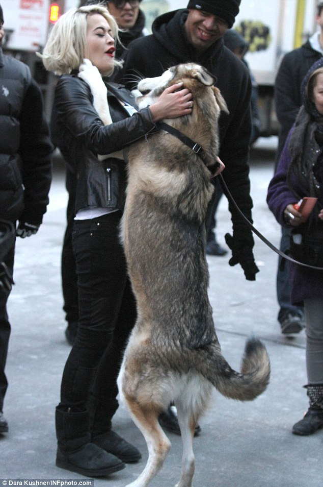 Canine love: Rita Ora enjoys some attention from a cute canine during a DKNY photo shoot in New York on Monday