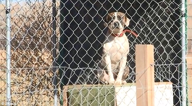 Caring: The couple had about 300 rescue animals, including this dog which was not involved in Friday's attack