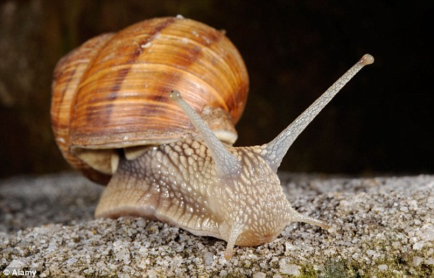 Slimy success: It might sound disgusting but snail mucus is said to have anti-ageing properties