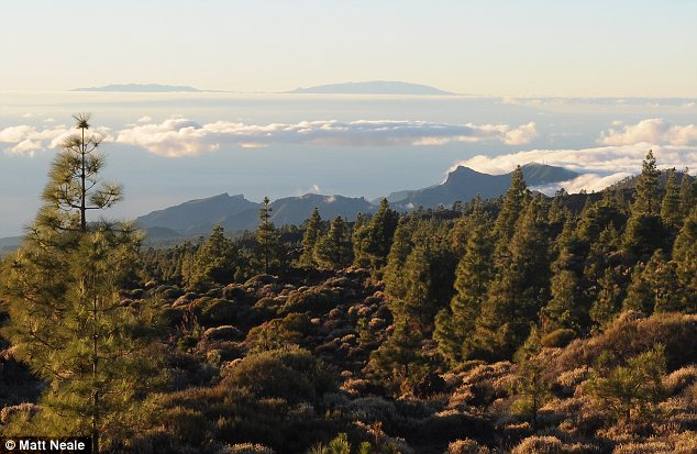 Fertile lands: Away from the coastal resorts,Tenerife remains unspoiled with neighbouring isle La Gomera visible from the foothills of Mount Tiede on a clear day