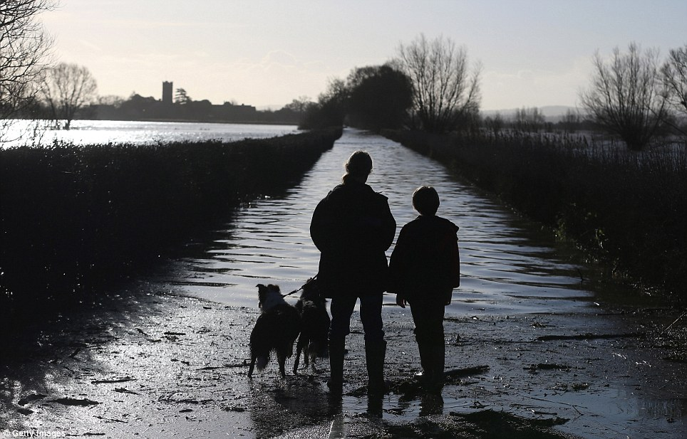 Looking out: The Somerset village of Muchelney, which lies between Taunton and Yeovil, has been cut off for four days after the roads flooded