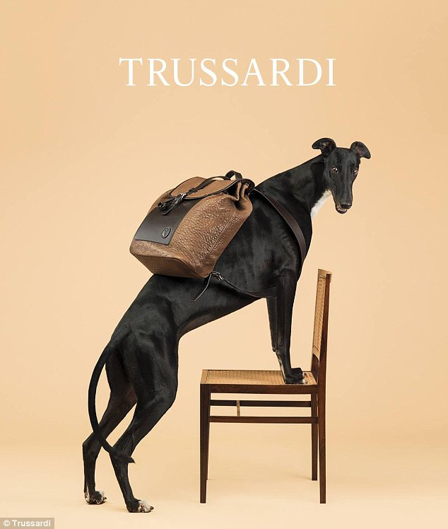 Historical origins: Trussardi chose the greyhound over Mr Wegman's traditional use of Weimaraners because the dog is its longtime mascot