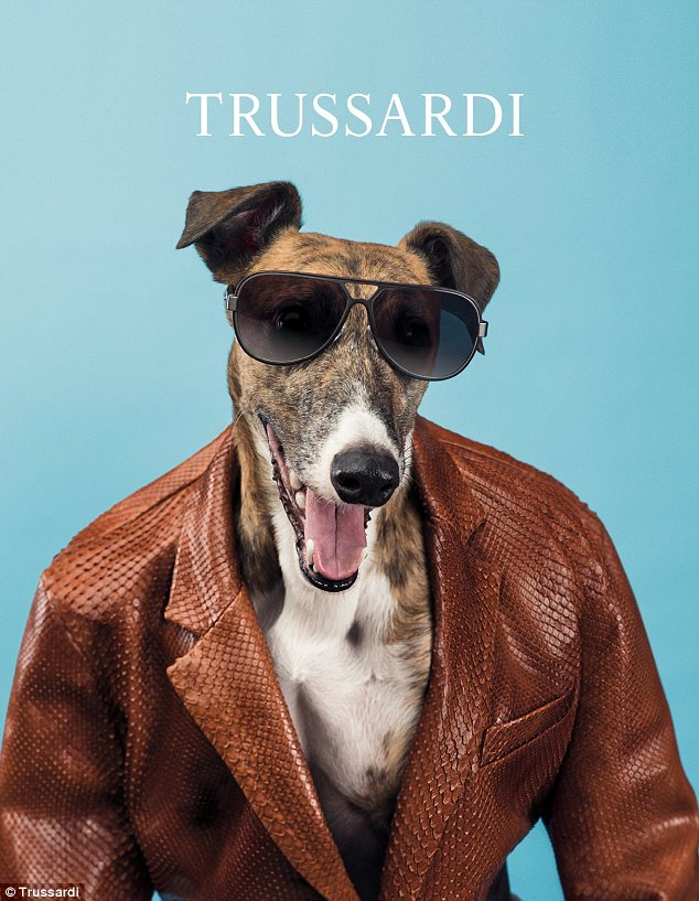 High-fashion dog: Trussardi has hired famous photographer William Wegman to shoot its spring 2014 campaign where Greyhound dogs take the place of models
