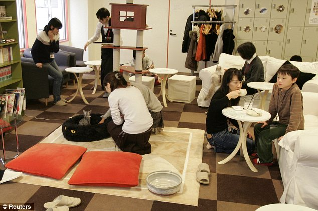 Coming to America: Cat Cafes (like this one seen in Tokyo) are making their way to the U.S. with the upcoming introduction of KitTea in San Francisco